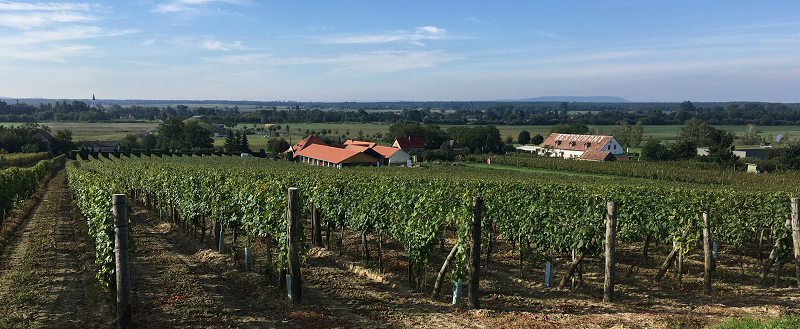 Das Weingut Csordás Fodor ist ein Familienbetrieb