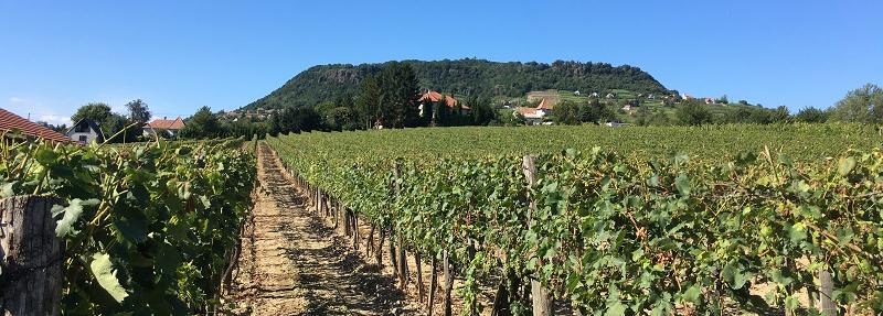 Der Rückschnitt, die Rohstoffauswahl, die Weinlese erfolgen traditionell und mit großer Expertise von Hand